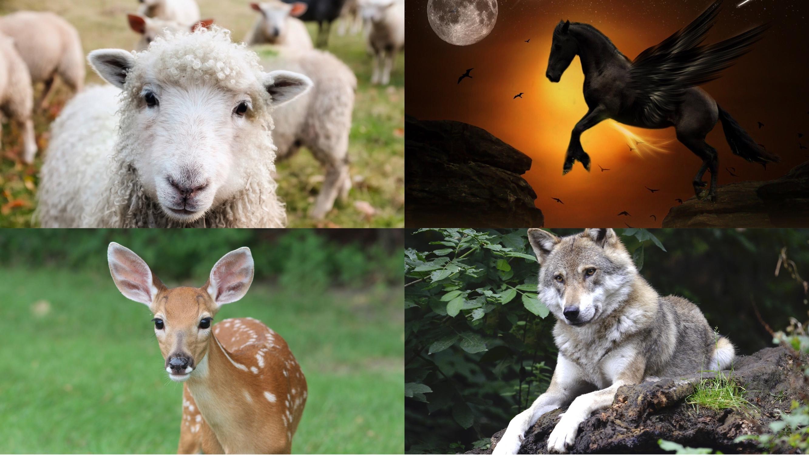 四柱推命で動物占い③【ひつじ、ペガサス、オオカミ、こじか】